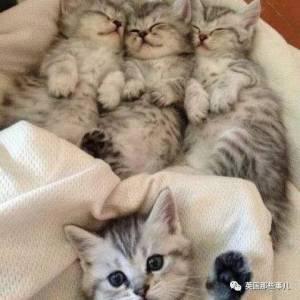 別人懷胎分娩拍紀念照,他倆領只貓也來了一全套…畫風簡直有毒!