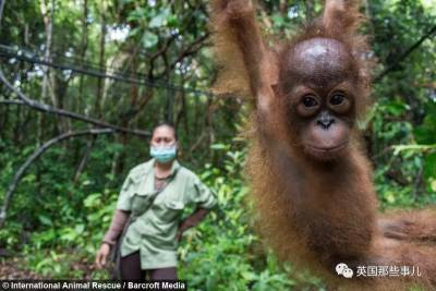 這大概是全世界最特別的幼兒園…裡面的學生,全都是小猩猩