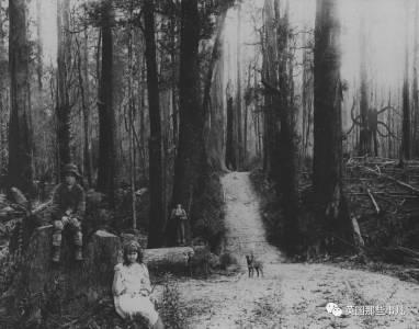 為了向傳說中神秘人獻祭,兩個12歲女孩打算殺死自己的同學