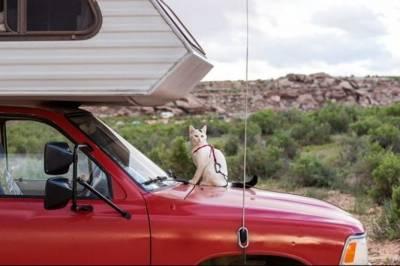 開着房車到處走的夫妻,途中出生的小寶寶,一隻熱愛溜達的喵...這個旅行家庭,有點特別...
