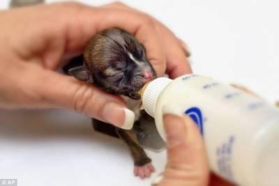 世界最小狗身如iPhone大小