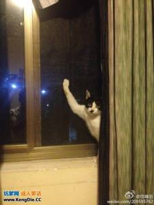 喵星人被紗窗勾住了