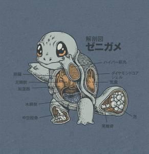 神奇寶貝解剖學