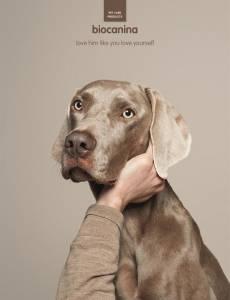 史上最強寵物產品廣告,想不瘋傳也難!
