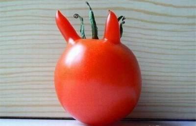 你們是蔬菜,正經點可以嗎?XD 現在這個時代連蔬菜都要賣萌才能生存,超可愛的啦!