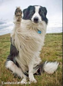 會揮手道別的熊!也太可愛了吧~~