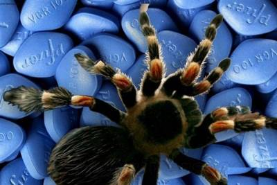 【熱議】被蜘蛛咬傷:等於服用超級偉哥