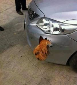 【好笑】無敵公雞大戰豐田車,車毀,雞在!