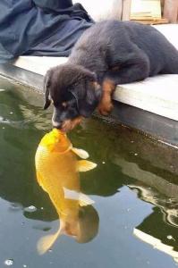 什麼?一隻小狗狗在河邊喝水的時候,不小心與水中的魚接吻了? ? ?