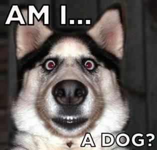 幫你分辨自己是否是狗的終極測試