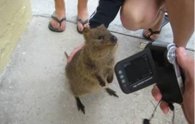 【超萌】怎麼可以這麼萌!你只是支袋鼠啊!ㄟ!