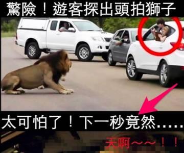驚險下一秒!遊客到野生動物園看獅子時...