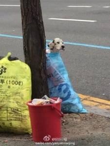誰這麼過分!把狗當成垃圾...