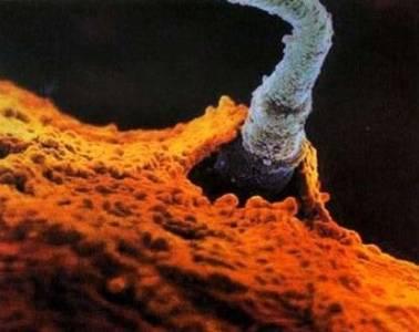 奇妙的受精過程--當精子遇到卵子