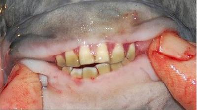 男生游泳一定要小心這種魚!