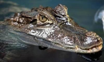 鱷魚屎塞下體能避孕!?古代驚悚避孕方法大公開!