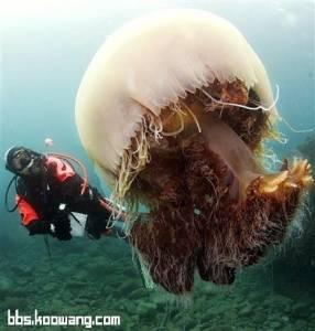 水母除了做成海蜇皮,還可以用來...
