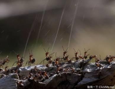螞蟻:快射爆他阿,我都不知道原來螞蟻也會噴....