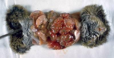 食物中可能帶有的10種寄生蟲
