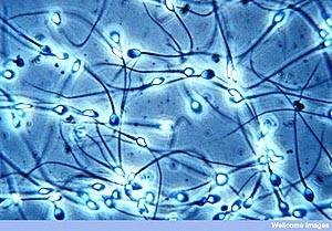 你可能不知道的精子8大妙用!