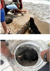 狗媽咪拜託人類幫忙救孩子 最後結果徹底感動全世界
