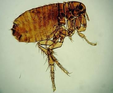 誰睡了你?你所不知道的臥室裡的寄生蟲!