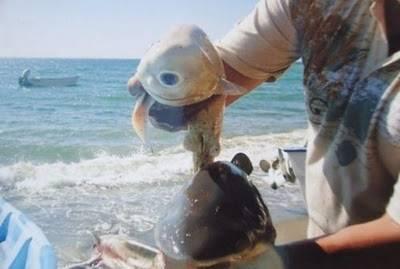 世界上還真的有這種鯊魚......