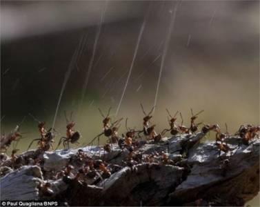 阿姆斯特朗旋風噴射阿姆斯特朗砲!你所不知道的螞蟻高射砲!