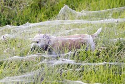 蜘蛛表示:歡迎來到澳洲~
