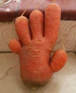 15個長成精的蔬菜們 最後一個有嚇到...