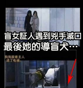 盲女証人在捷運上遇到兇手想滅口,最後她的導盲犬…
