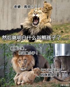 獅子王寫給老婆的情書,既浪漫又爆笑,沒想到獅子也能那麼深情!