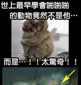 科學家終於找到了世界上最早學會啪啪啪的動物…..