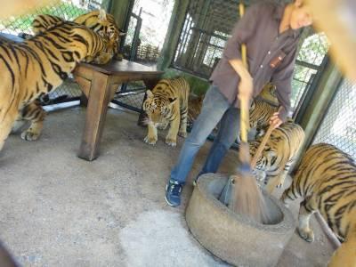 可是台灣,我差點回不去了...(旅客去泰國差點被老虎吞了!)