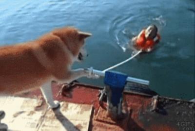 旺星人怎麼這樣!!主人落水拉著繩子好不容易要游上來,旺星人卻…!!