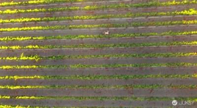 全世界第一部空拍A片! 到底是看風景還是看...