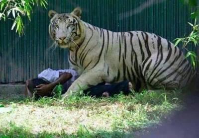 新德里動物園發表的最新關於老虎咬死人事件的最新死亡報告!結果出爐了,令大家都沉默了!