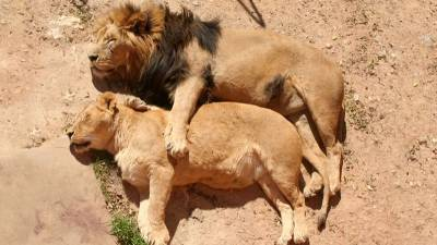全世界最性感的情侶睡姿... 未成年慎入