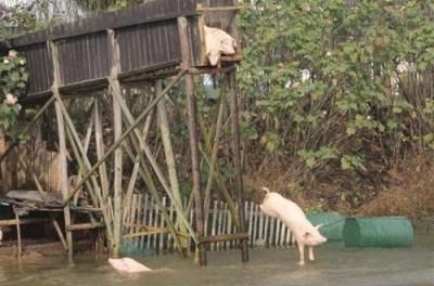 如果我跟你媽一起掉水裡,爆笑正確答案神展開!!