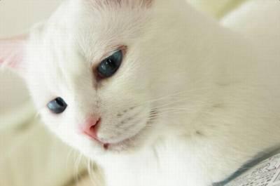 這隻看起來很優雅的貓咪,睡著的模樣真是嚇死我了啦!!!!