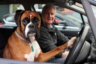 不滿主人逛街太久,狗狗狂按車喇叭求關注