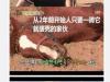 韓國有一匹賊賊的馬,一要騎他就裝暈倒,但拿東西給他吃又忍不住吃起來~~太萌啦!!