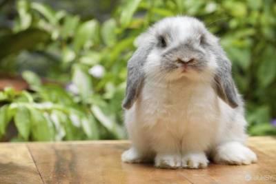 教師課堂上殺兔 聲稱「我只是想告訴學生肉從哪裡來!」