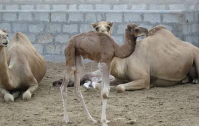 星巴克店員都這樣嗎...駱駝先生的怒吼!!!
