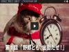 必勝客歡樂送 怎麼來隻貓 │漾傳媒