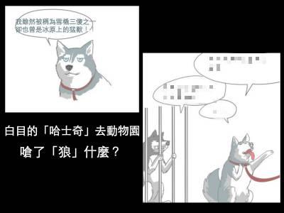大不敬的「哈士奇」竟然對「狼」嗆聲!!還有好多動物園裡的殘酷真相~~~看完驚呆了!!