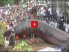 震驚!越南地底挖出巨型不明生物近似哥斯拉......現場視頻曝光