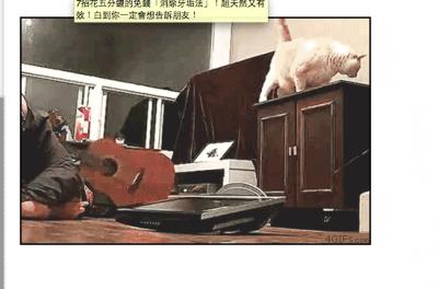 養貓人士,運動時務必注意!!很危險!!!
