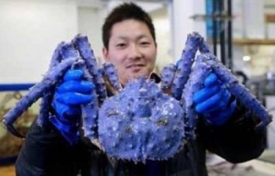 10大全球最驚悚的先天變異生物~ 第5種看起來好恐怖呀!!