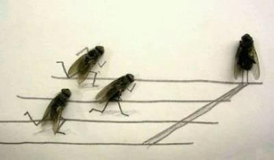這輩子讓我覺得蒼蠅有一點點可愛的時刻...沒了!就這一次
